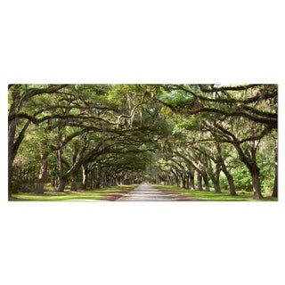 Designart 'Live Oak Tunnel' Photography Metal Wall Art