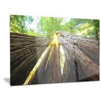 Designart 'Sequoia Tree' Photography Metal Wall Art