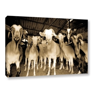 Andrew Lever's 'Goats Strike A Pose' Gallery Wrapped Canvas