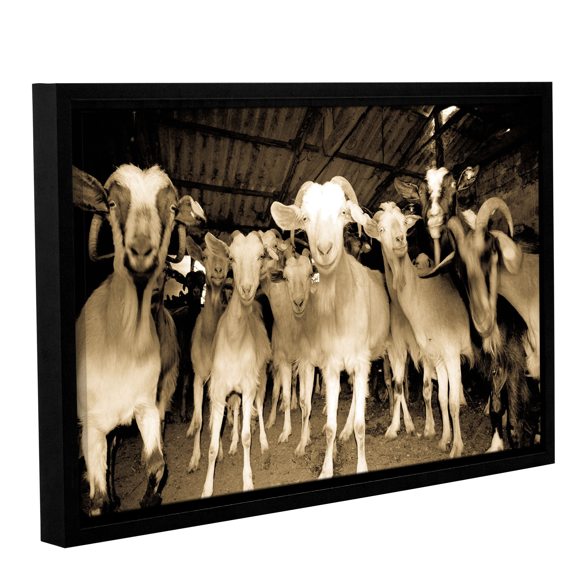 ArtWall Andrew Lever's 'Goats Strike A Pose' Gallery Wrap...