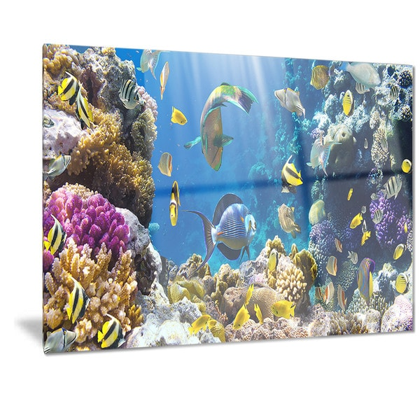 Shop Designart 'Fish In Coral Reef' Seascape Photography