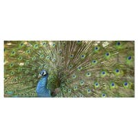 Designart 'Beautiful Peacock with Feathers' Animal Metal Wall Art