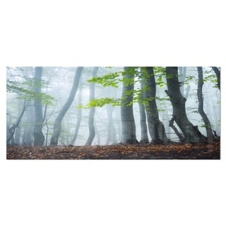 Designart 'Green Leaves in Old Forest' Landscape Photo Metal Wall Art