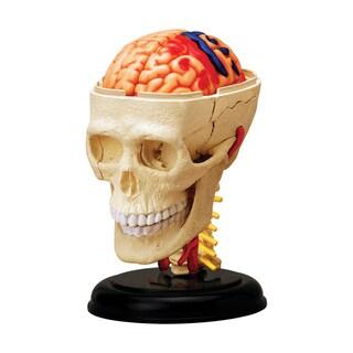 Tedco Toys Kids Classroom Multi-color 4.5-inch Cranial Nerve Skull Anatomy Model