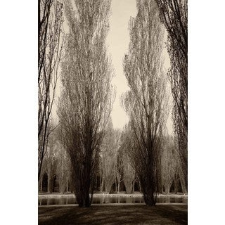 Marmont Hill - Tree Pair Print on Canvas
