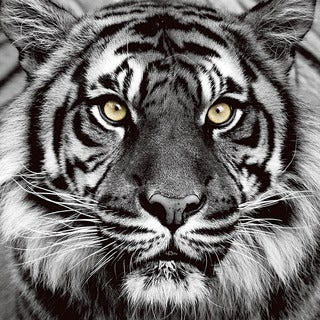 Benjamin Parker 'Tiger' 32-inch Tempered Art Glass