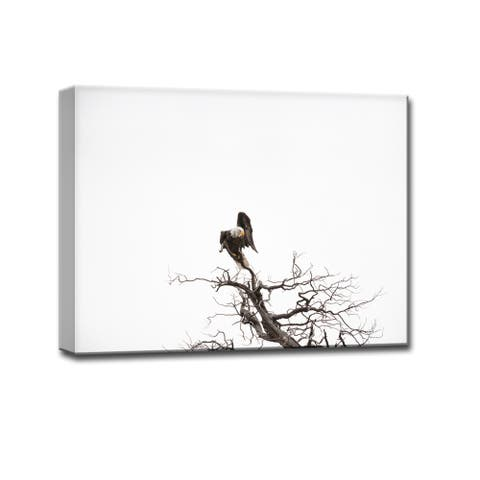 Bald Eagle' Nature Photography Canvas Print