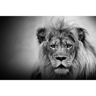 Cortesi Home 'King of the Jungle' 24-inch x 36-inch Tempered Glass Wall Art
