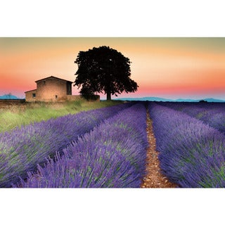 Benjamin Parker 'Lilac Field' 20-inch x 30-inch Tempered Glass Art