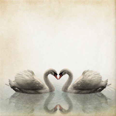 Benjamin Parker 'Swans' 32-inch Canvas Wall Art