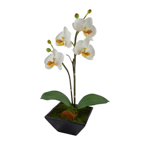 Red Vanilla White Orchid Ceramic Centerpiece With Black Base