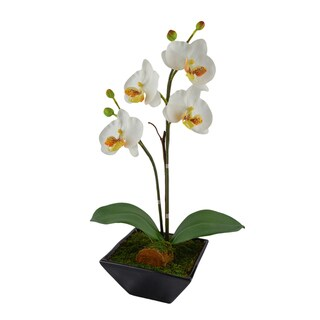Red Vanilla White Orchid Ceramic Centerpiece With Black Base - N/A