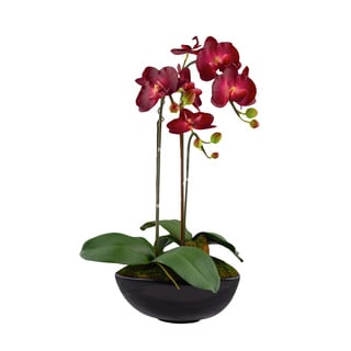Burgundy 22-inch x 9.5-inch Artificial Phalaenopsis Orchids in Black Vase