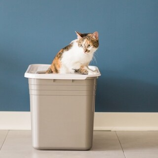 Petmate Grey/White Top-entry Cat Litter Pan