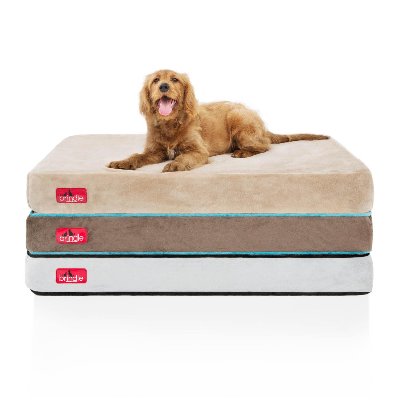 Brindle Memory Foam 4 Inch Orthopedic Dog Bed Overstock 12014894