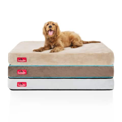 Shop Pet Supplies | Discover our Best Deals at Overstock