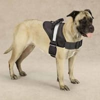 Guardian Gear Black Dog Excursion Harness