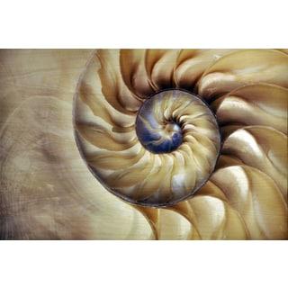 Empire Art 'Nautilus' UV Printed Wall Art