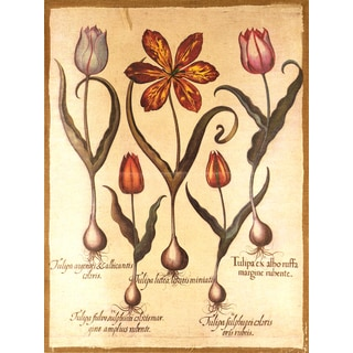 Empire Art 'Botanical A' Fresco Image Printed on Hand Applied Plaster Jute