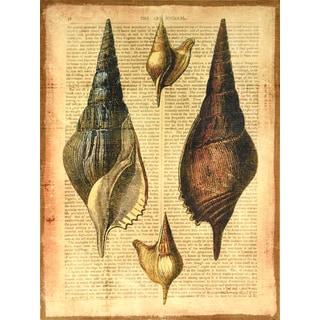 Empire Art 'Antiquarian Shells 2' Fresco Image Printed on Hand-applied Plaster Jute