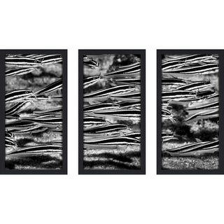 Craig Dietrich 'Catfish Fever' 3-piece Underwater Photography Framed Plexiglass