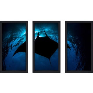 Craig Dietrich 'Black Manta' 3-piece Underwater Photography Framed Plexiglass