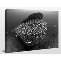 Craig Dietrich 'Tornado 2' Underwater Photography Canvas Wall Art