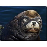 Craig Dietrich 'Sleeyhead' Underwater Photography Canvas Wall Art