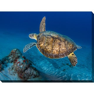 Craig Dietrich 'Painted Turtle' Underwater Photography Canvas Wall Art