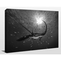 Craig Dietrich 'Flying' Underwater Photography Canvas Wall Art