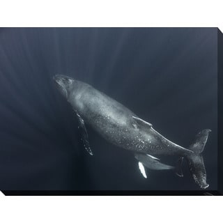 Craig Dietrich 'Feeding' Underwater Photography Canvas Wall Art