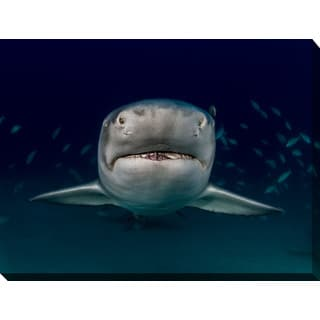 Craig Dietrich 'CloseUp' Underwater Photography Canvas Wall Art