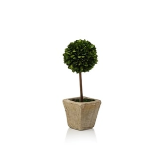 Single Ball Boxwood Topiary In Square Pot