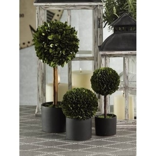 Round Boxwood Topiary in Black Glazed Pot