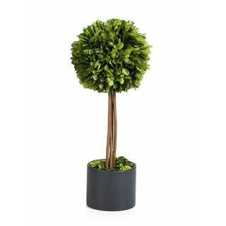 Single Ball Boxwood Topiary In Black Glazed Pot- Tall