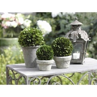 Topiary Boxwood Potted Ball (Set of 2)