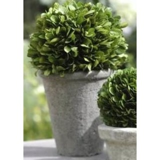 "10"" Tall Preserved Boxwood Topiary, Single Ball"