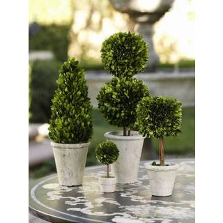 Mini Preserved Topiary (Set of 6)