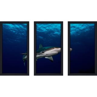 Craig Dietrich 'Grey Streak' Underwater Photography Framed Plexiglass Set of 3