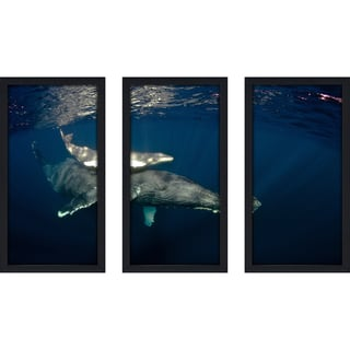 Craig Dietrich 'Motherly Love' Underwater Photography Framed Plexiglass Set of 3