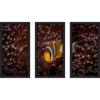 Craig Dietrich 'Red Velvet' Underwater Photography Framed Plexiglass Set of 3