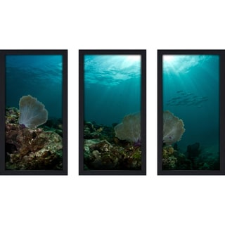 Craig Dietrich 'See Fan' Underwater Photography Framed Plexiglass Set of 3
