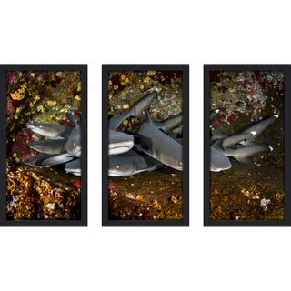 Craig Dietrich 'Shark Stack' Underwater Photography Framed Plexiglass Set of 3