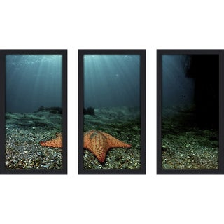 Craig Dietrich 'Shining Star' Underwater Photography Framed Plexiglass Set of 3