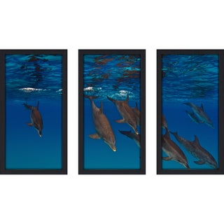 Craig Dietrich 'Takin A Dive' Underwater Photography Framed Plexiglass Set of 3