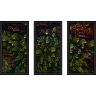 Craig Dietrich 'Underwater Traffic' Underwater Photography Framed Plexiglass Set of 3
