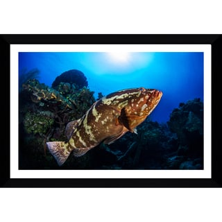 Craig Dietrich 'FriendlyGrouper' Framed Plexiglass Underwater Photography