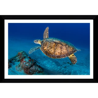 Craig Dietrich 'Painted Turtle' Framed Plexiglass Underwater Photography