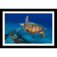 Craig Dietrich 'Painted Turtle' Framed Plexiglass Underwater Photography