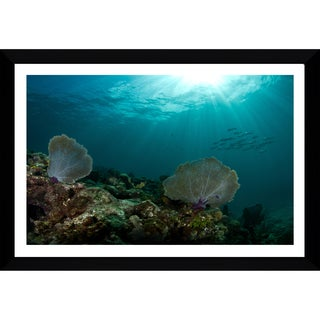 Craig Dietrich 'See Fan' Framed Plexiglass Underwater Photography